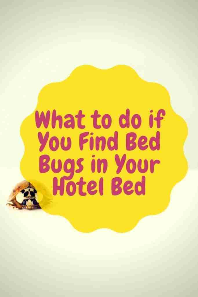 What to do if You Find Bed Bugs in Your Hotel Bed