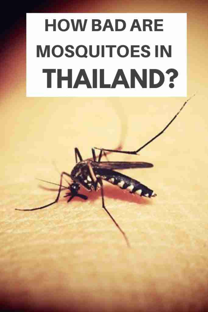 How Bad Are Mosquitoes in Thailand