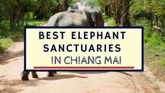 Best Elephant Sanctuaries in Chiang Mai