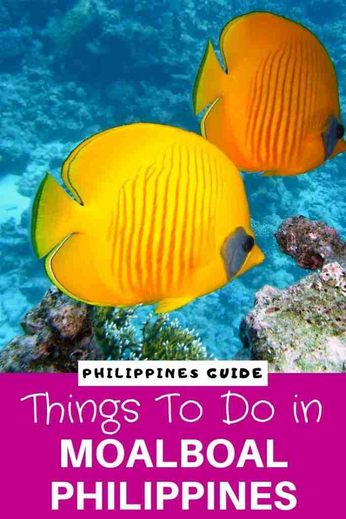 Things To Do in Moalboal Philippines