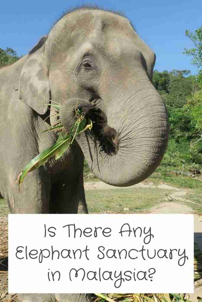 Is There Any Elephant Sanctuary in Malaysia