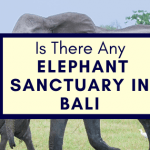 Is There Any Elephant Sanctuary In Bali?