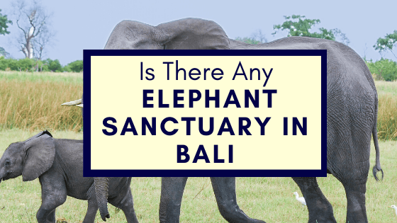 Elephant Sanctuary in Bali