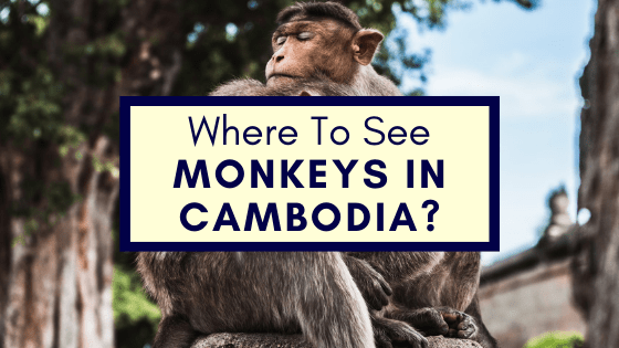 Monkeys in Cambodia